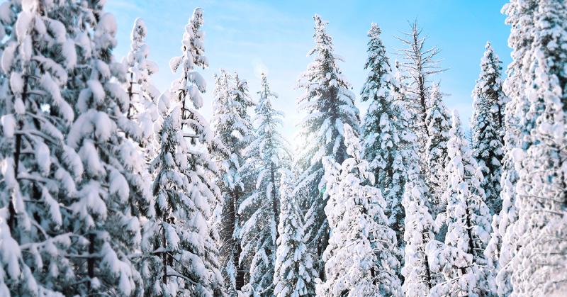 vignette-communication-saisonnière-hiver3